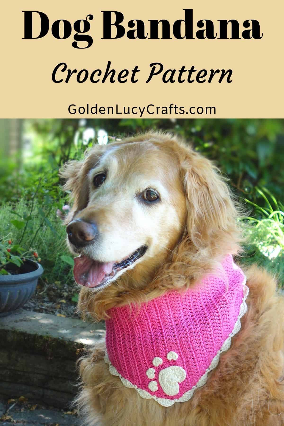 Golden retriever dressed in pink crocheted dog bandana.