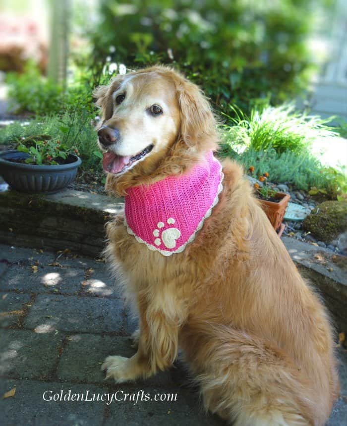 Crochet for pets, dog bandana
