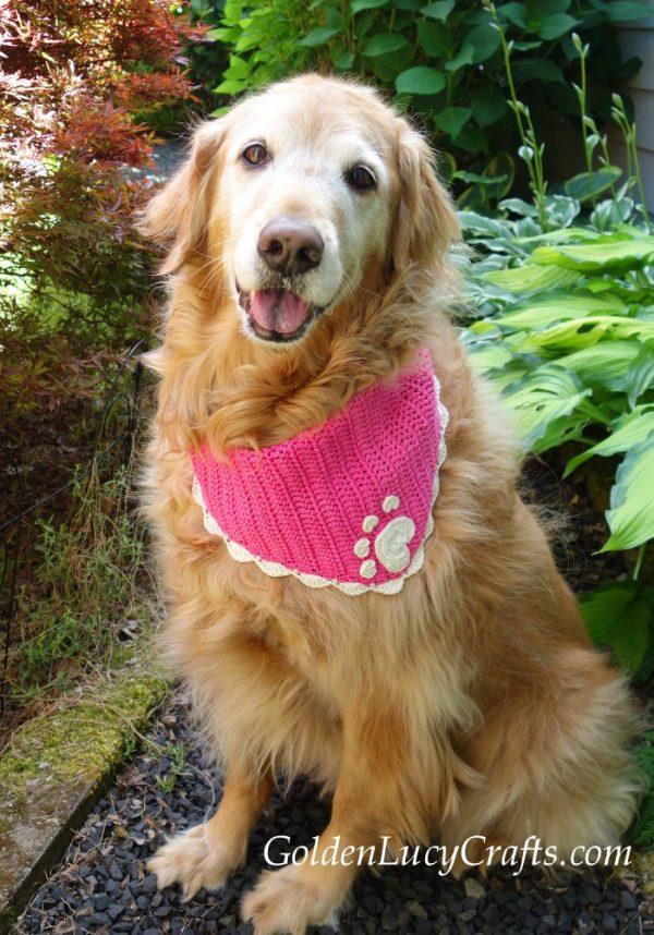 DIY dog bandana