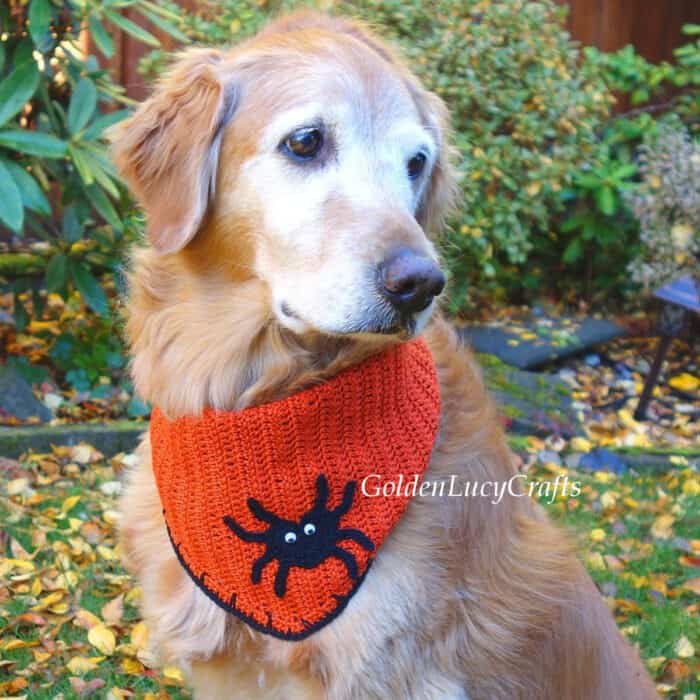 Dog dressed in orange bandana with spider applique on it.