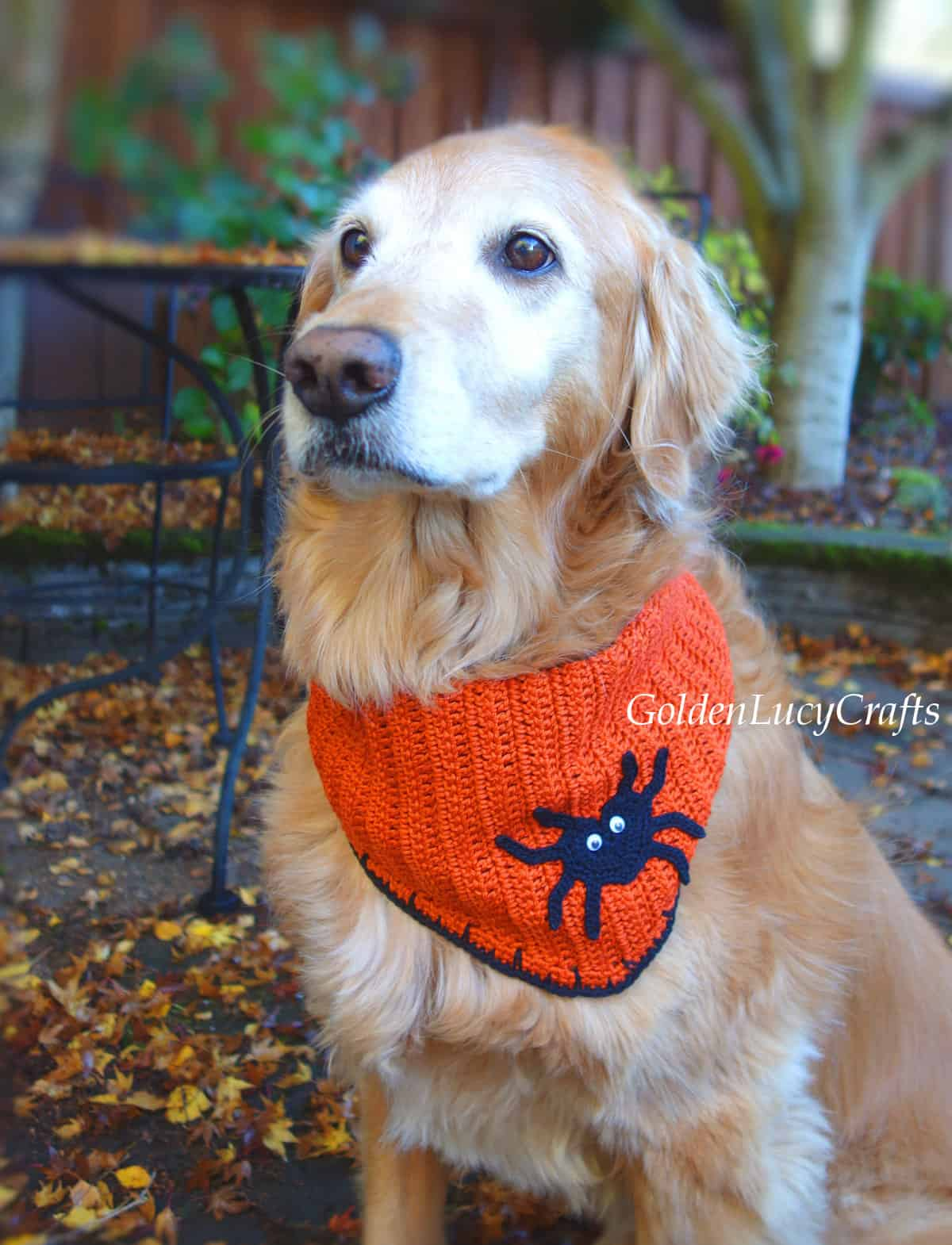 Golden retriever dressed up for Halloween.