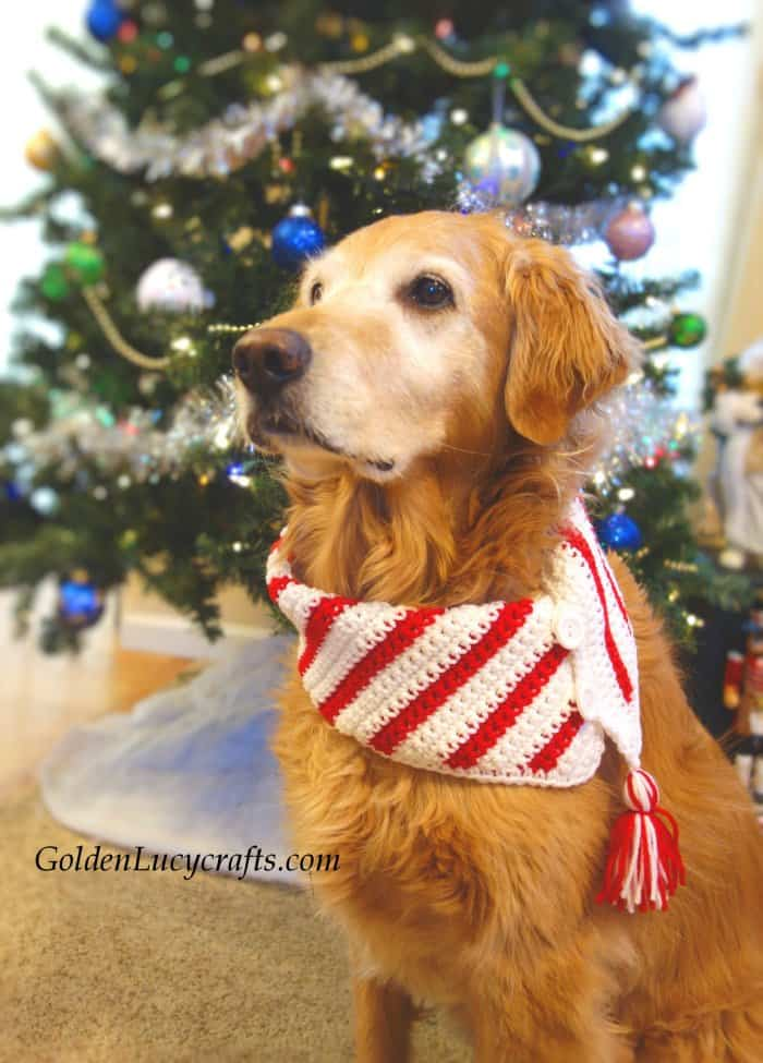 Crochet Christmas dog scarf, DIY, crocheting for pets, bandana, neckwarmer, free crochet pattern