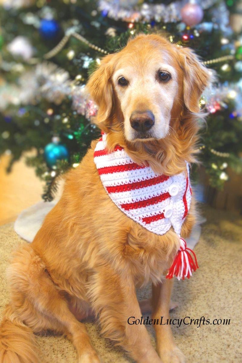 Crochet Christmas dog scarf, DIY, crochet for pets, bandana, neckwarmer, free pattern