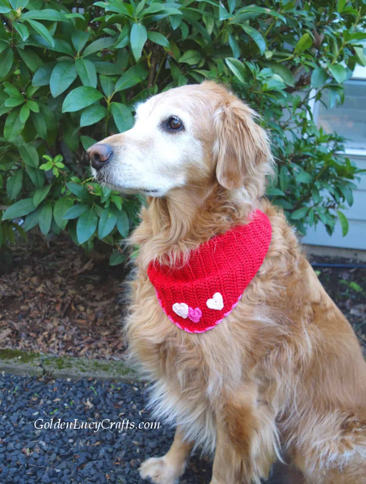 Dog dressed in Valentine's Day red bandana embellished with three hearts.