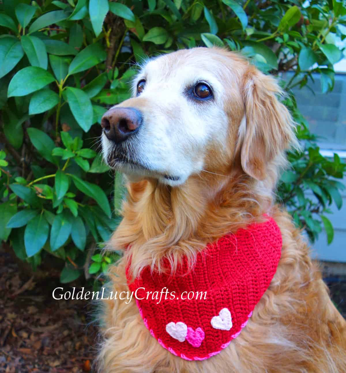 Dog dressed in red bandana embellished with three hearts.