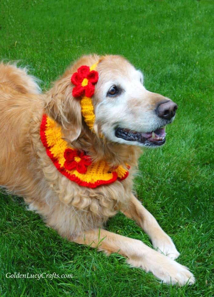 Crochet dog accessories, headband, collar