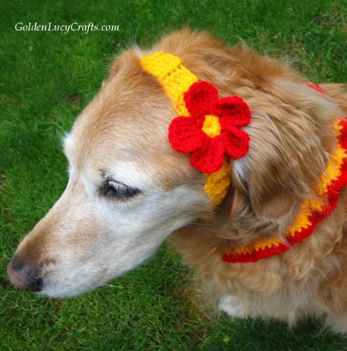 Crochet dog headband embellished with flower
