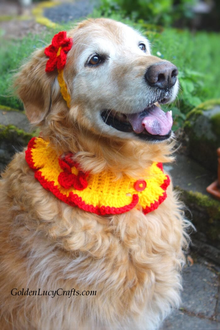 Crochet dog headband and collar