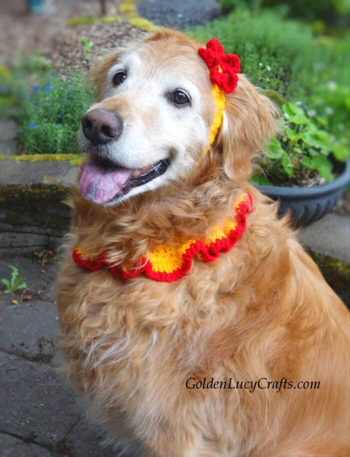 Crochet for dog, crochet headband, collar