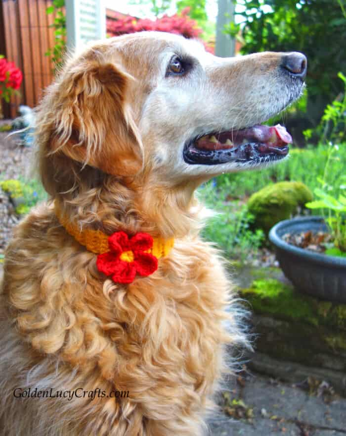Crochet dog collar embellished with flower