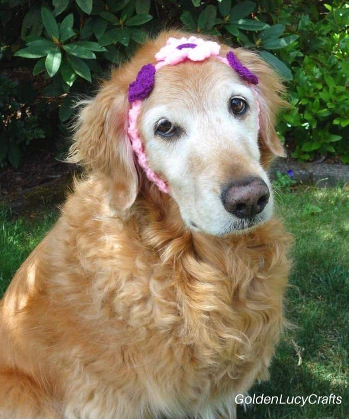 Crochet for pets -  headband for dog