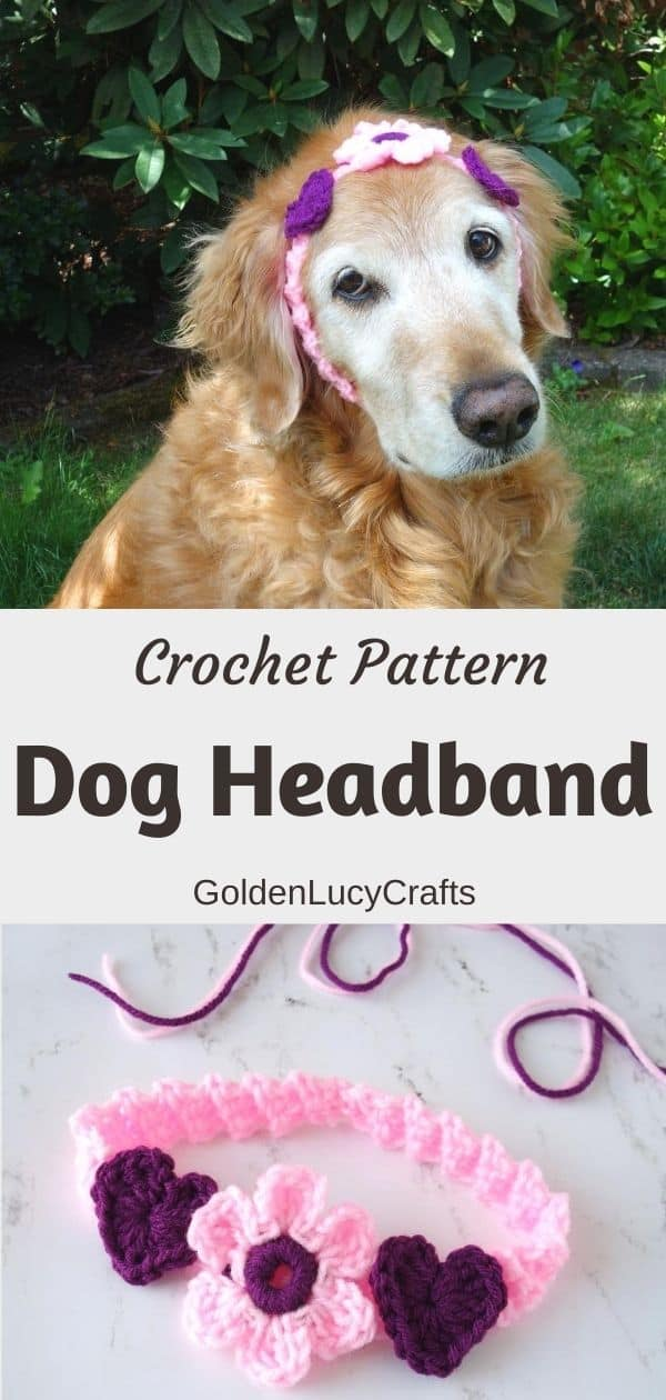 Crochet headband for dog