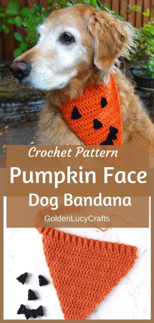 Golden retriever dressed in crochet Halloween bandana, Pumpkin Face dog bandana, crochet pattern