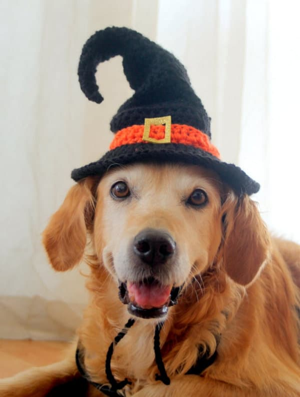 Crochet witch hat for dog