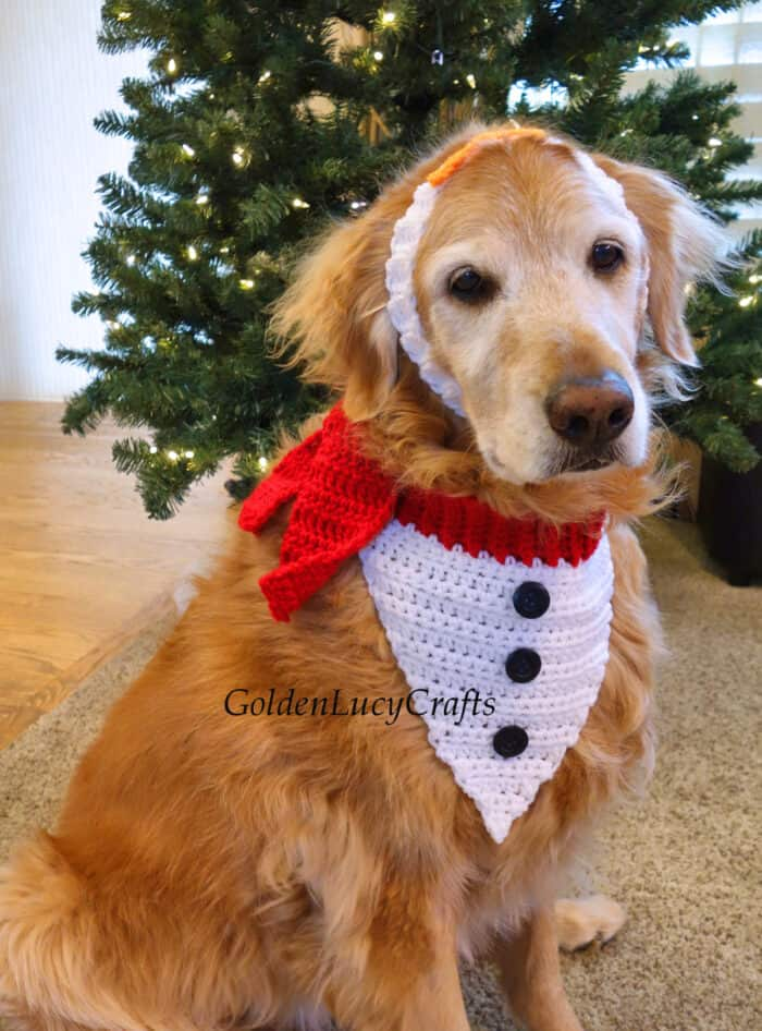 Dog dressed in crochet Christmas dog bandana