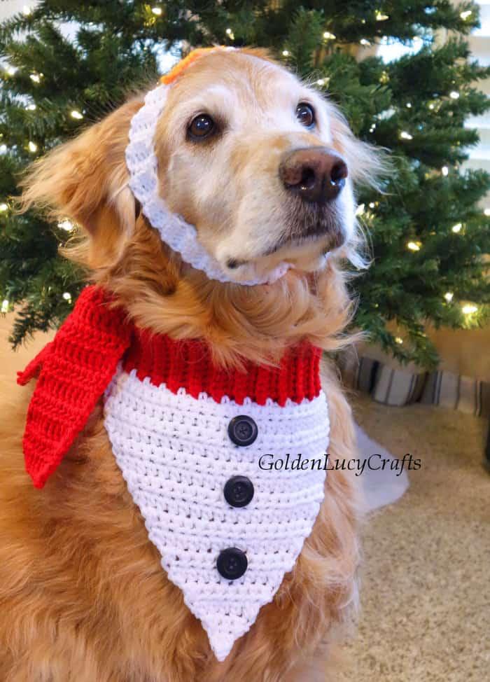 Dog dressed in crochet Christmas dog bandana