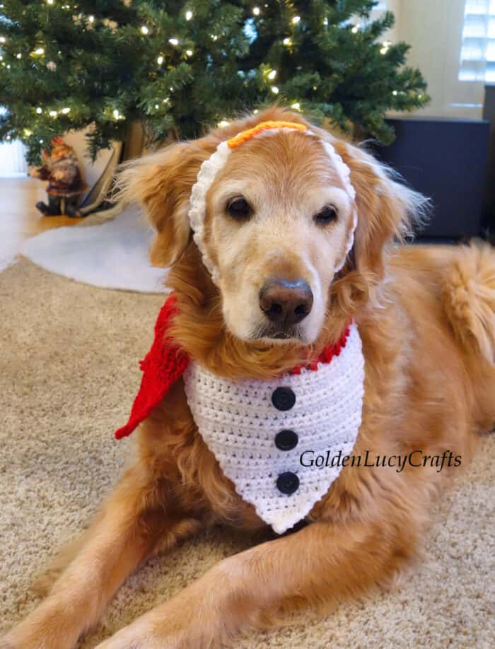Dog dressed in crochet Christmas dog bandana and headband laying in front of Christmas tree