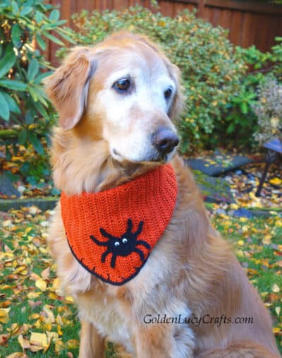 Dog dressed in Halloween bandana embellished with spider.