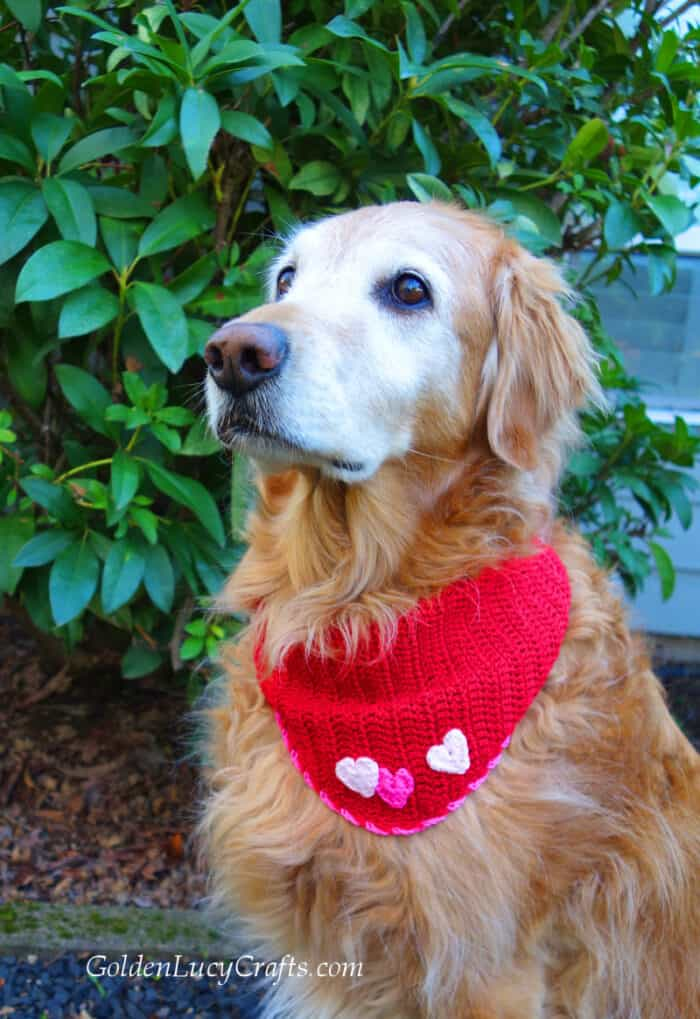 Dog dressed in red crocheted bandana embellished with hearts