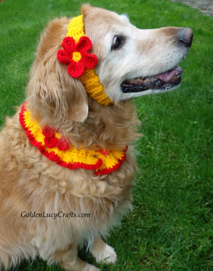 Dog dressed in crocheted collar and headband