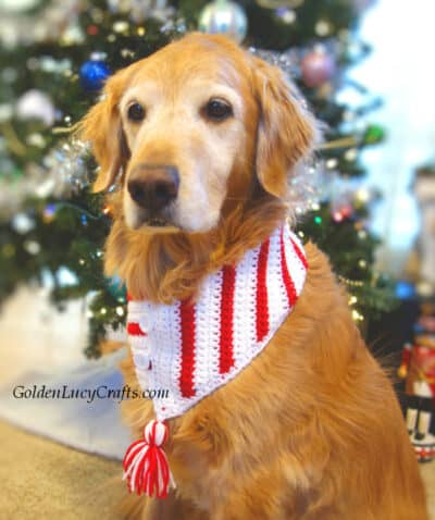 Dog dressed in crocheted Christmas scarf.