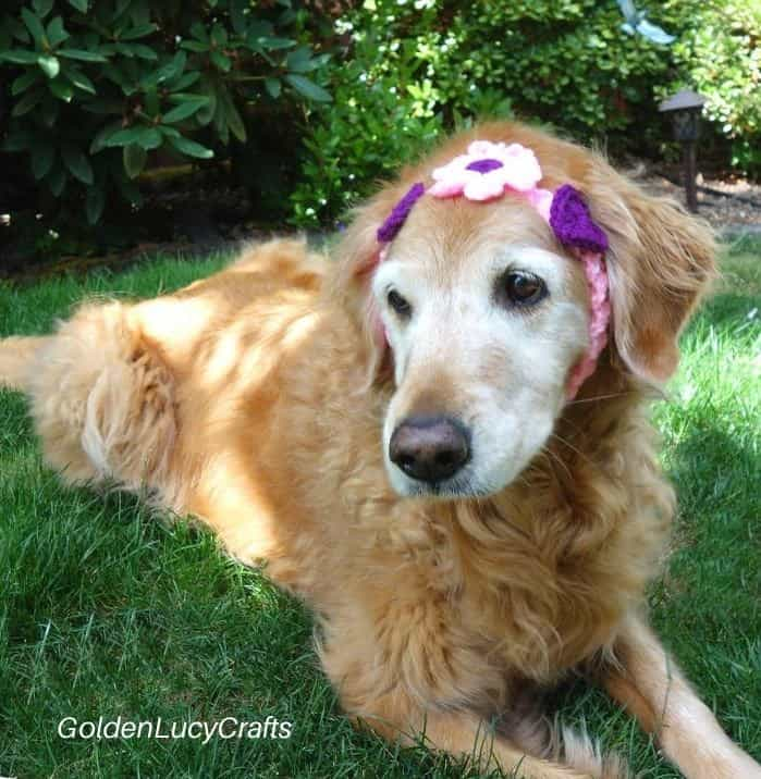 Dog dressed in crocheted headband embellished with flower and hearts.