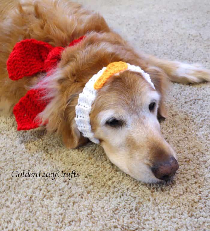 Dog dressed in crochet Christmas dog bandana and headband laying on the floor