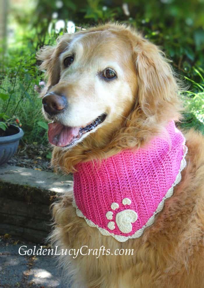 Dog dressed in pink bandana