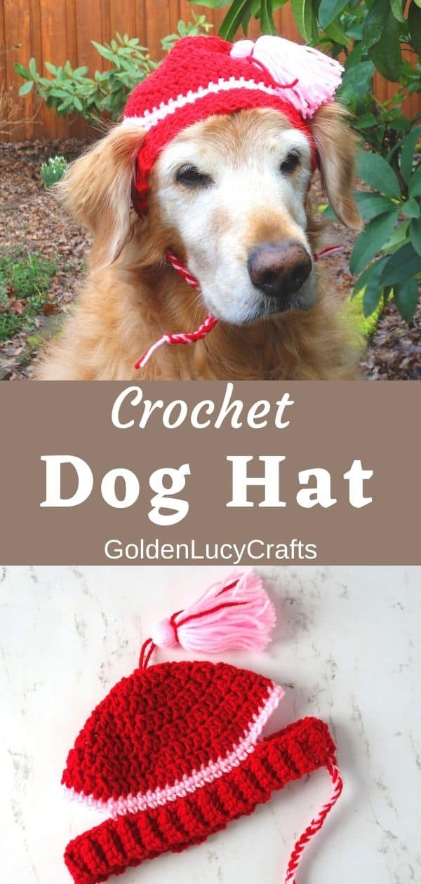 Dog wearing red crocheted hat, crocheted dog hat laying on the flat surface.