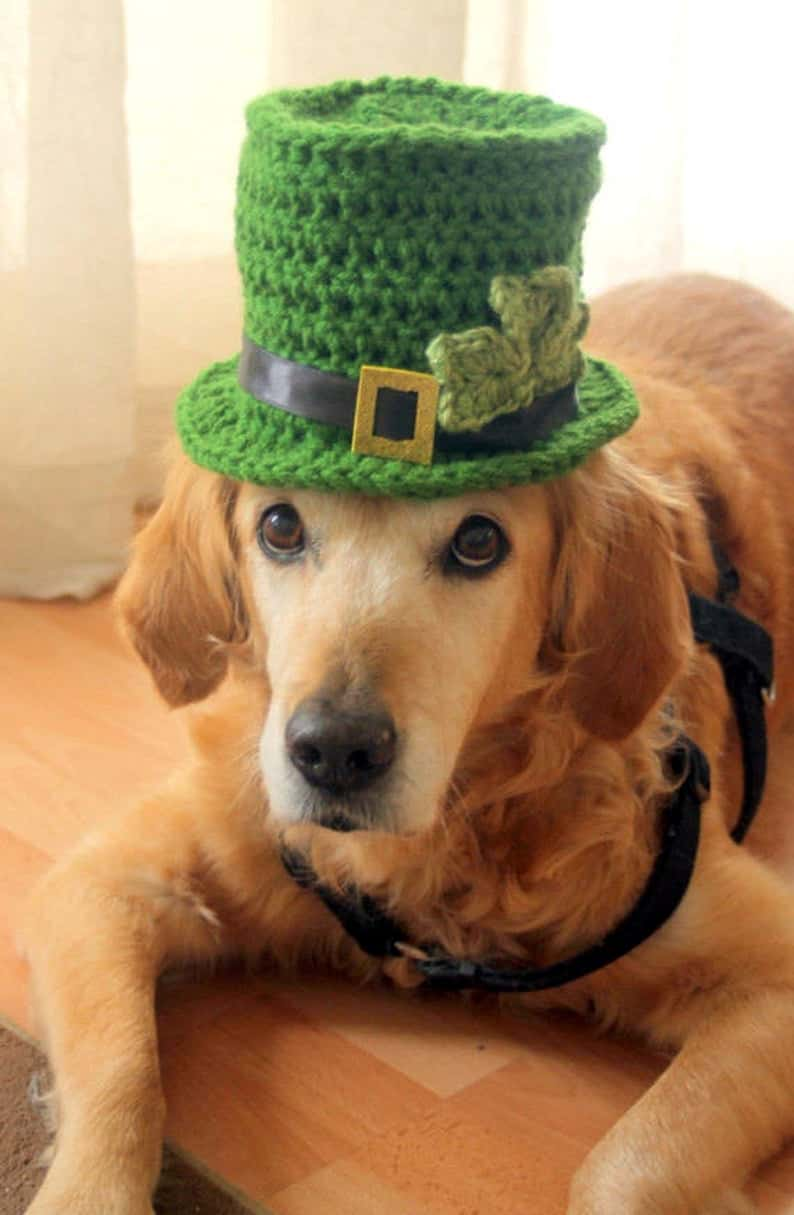 Dog dressed in green St. Patrick's Day hat.