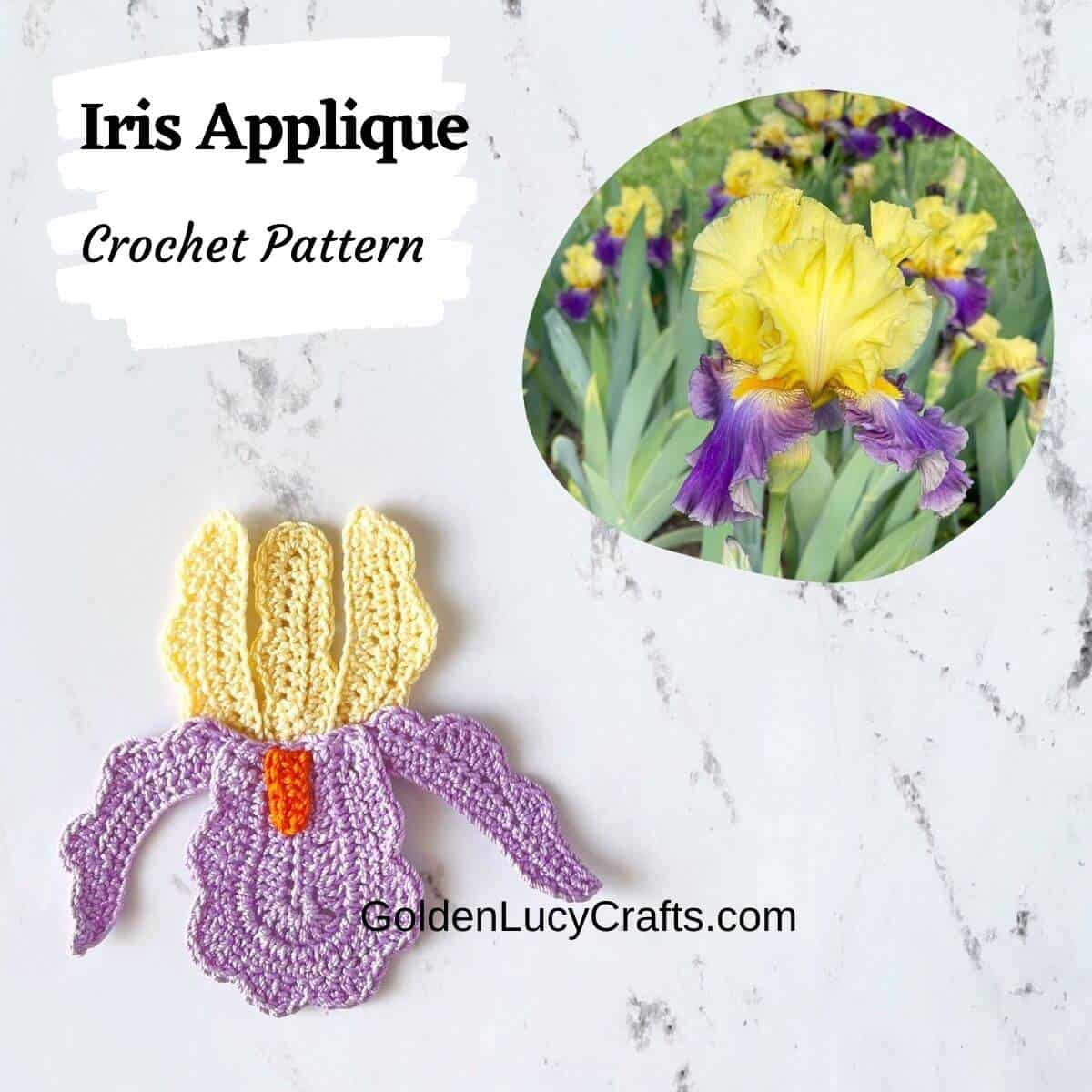 Crochet iris applique on the bottom, real iris picture on top.