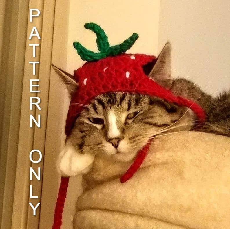 Cat dressed in strawberry hat.